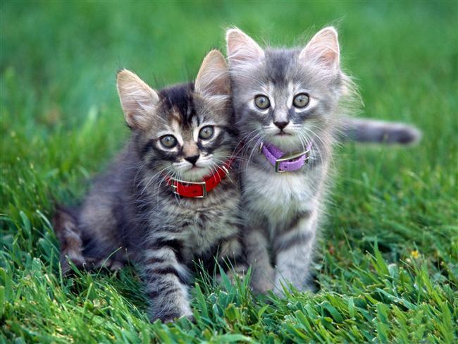 13- Bubbles ve Domino adında iki kedisi var.