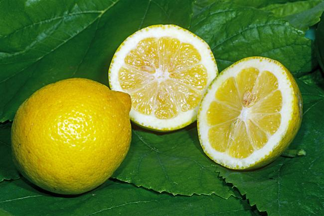 Limon Sindirim sisteminin sağlıklı çalışmasını sağlar.Mide asidi üretimini arttırarak sindirimi zor gıdaların (yağlı gıdalar, kırmızı et vb.) sindirimine yardımcı olur. Limon suyu aynı zamanda karaciğerin safra üretimini arttırarak yağların sindirilmesini kolaylaştırır.