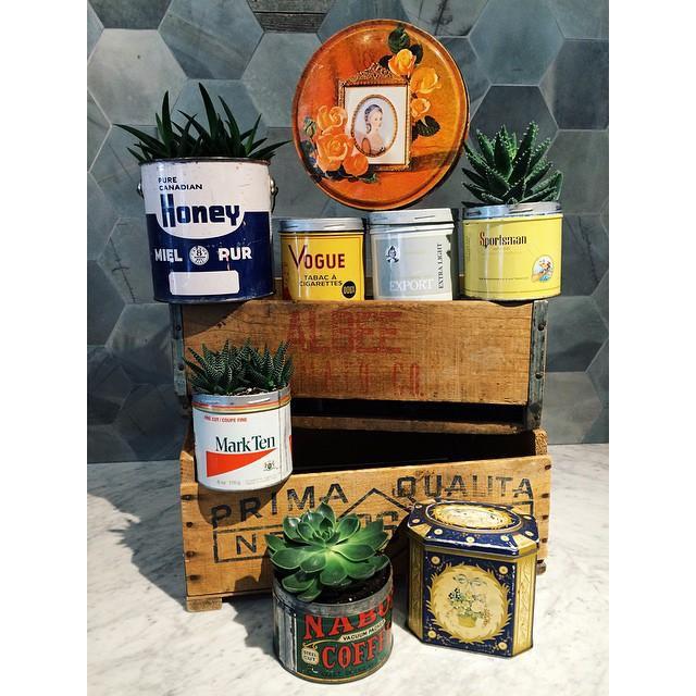 Nostaljik bir görüntü için teneke kutular...  Eski boya/konserve/kurabiye tenekelerinizi atmayıp saksı yaparak değerlendirebilir, evinizin bir köşesini nostaljiye ayırabilirsiniz.