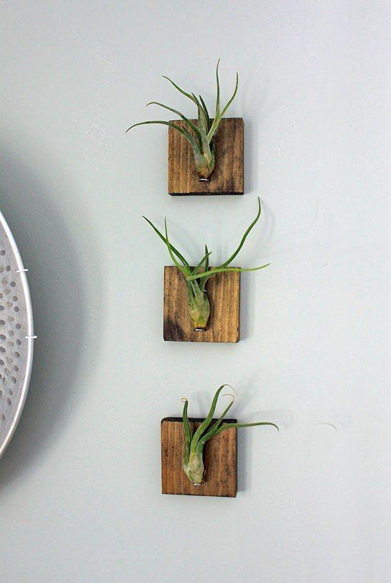 Evde bitkilerle sanat yapın!  Soğanı olan çiçekleri tahta parçalarına sabitleyerek minik canlı tablolar oluşturabilirsiniz. Eminim evinize tazelik katacak ve misafirleriniz bu fikre bayılacak.