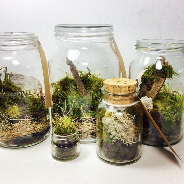 Boş kavanozları bitki fanuslarına dönüştürün!  Evde çok kavanoz var napsak ki diye düşünüyorsanız işte size fırsat! Süslü restoranlardaki gibi bitki fanusları yapabilirsiniz.