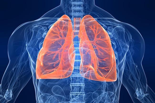 Akciğerler  Erkeklerin akciğerleri kadınlarınkinden yüzde 50 daha geniş hacme sahiptir.