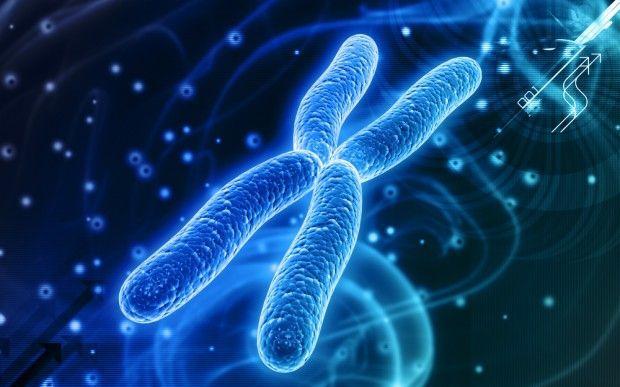 Kromozomlar  Erkek ve dişilerde toplam 46 kromozom vardır. Bunların yarısı babadan, yarısı anneden gelir. Bu 46 kromozomun içinden iki tane cinsiyet hormonu vardır ki; bu erkekte XY, kadında XX olarak bulunur.