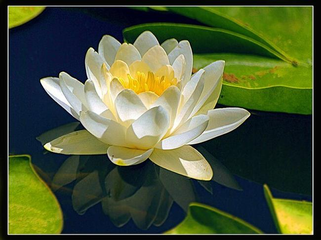 Nilüfer çiçeği  Budizmin uyanış sembolü nilüfer, görünüşe göre su tutmayan kumaş elde etmek isteyenleri de uyandırmış. Bir su bitkisi olması dolayısıyla liflerinin doğal sus tutmama özelliği olan bitki yumuşaklığıyla da Uzakdoğulular'ın gönüllerini fethetmiş. Kırmızı, yeşil, sarı, kahverengi, turuncu ve lila renklerde üretilen iplerden yapılan bir ceket Amerika'da yaklaşık $5.600'a satılıyor.