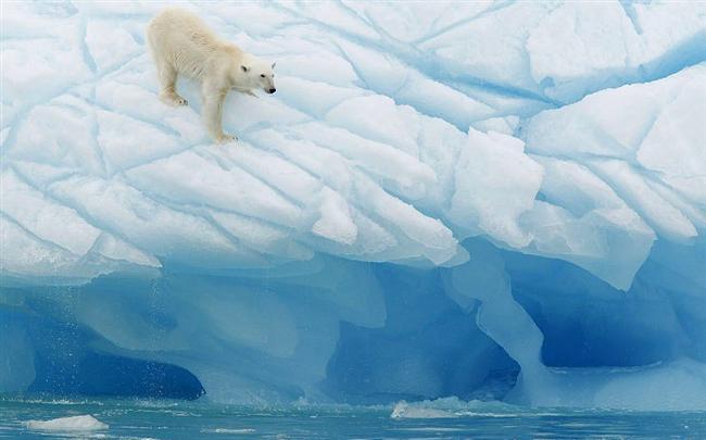 Svalbard  Kutup ayılarının kaybolma tehlikesi bulunan cennetlerinden...