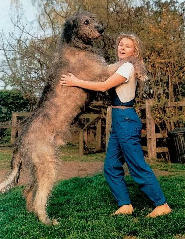 Köpeği olan kadınlar değişikliğe her zaman açıktır. Asla sıradanlaşmaz. Onların yanında sıkılmazsınız.