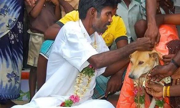 Köpekle evlenen adam  Bu düğünün hikayesi epey ilginç. Selva Kumar adlı Hindistanlı damadımız alkollü olduğu bi gün çiftleşen iki köpeği taşlamak suretiyle öldürmüş ve bu olaydan sonra kısmi felç geçirmiş. Bir kulağı duymaz olmuş. Falcıya gidip olayı anlatmış, falcı da ona bir köpekle evlenmesini yoksa lanetin kalkmayacağını söylemiş.