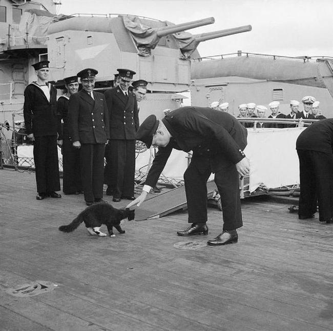 """Winston Churchill  """"Ben şahsen domuzları tercih ediyorum. Köpekler bizi üstün görür. Kediler ise kendilerini üstün görür. Domuzlar ise kendileriyle eşit davranır.""""  Meraklısına Not: Resimde Churchill'in sevdiği Blackie isimli kedi her iki dünya savaşına da katılmıştır. Churchill, Atlantik Paktı'nı imzalamak için ABD'ye giderken güvertede tüm ekiple birlikte kendisini selamlamış ve yolculuk boyunca kendisine eşlik etmiştir."""