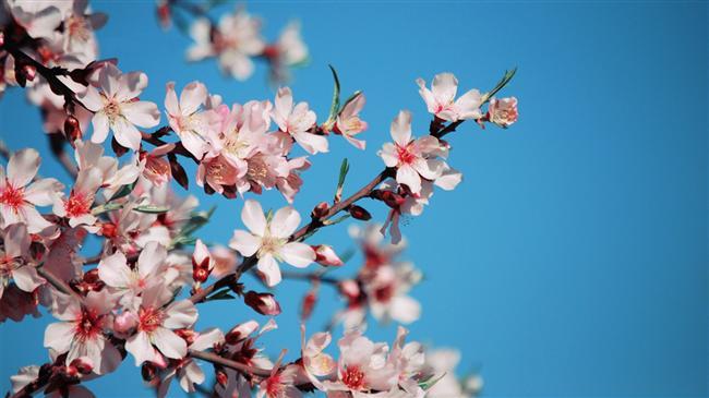 Balık: Yasemin, limon çiçeği, zambak, kiraz çiçeği, okaliptus