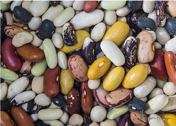 Bakliyat, çerez, fasulye  Bakliyat, çerez, fasulye çeşitleri zengin birer protein kaynağıdır.
