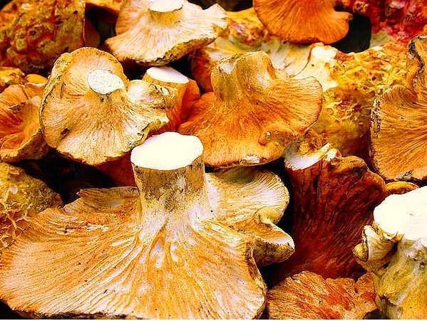 Mantar   Mantar, oldukça zengin bir antioksidan, potasyum, B vitamini ve lif kaynağıdır.
