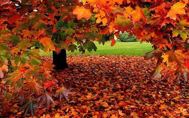 Koşup dökülmüş yaprakların arasına atlamak... Artık etrafta pek ağaç kalmadığından en çok da bunu özledik...