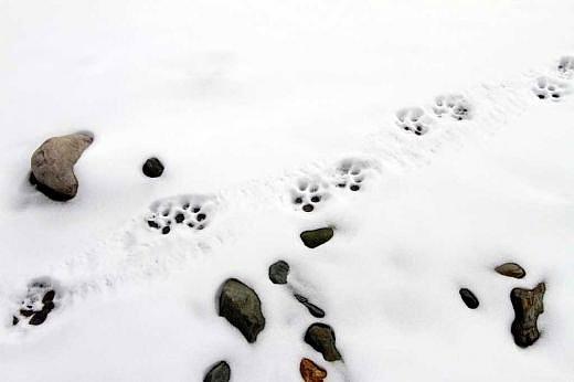Kar yağdığında kedilerin köpeklerin pati izlerini takip etmek....