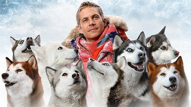 Kutup Macerası / Eight Below (2006) | IMDb: 7.3  Antartika'da, Dr Davis McClaren ile yaptıkları bir seferin ardından, kızak köpeği eğitmeni olan Jerry Shepherd, meslektaşları ile birlikte kutupları terk etmek zorunda kalır. Ciddi bir kar fırtınası yaklaşmaktadır. Köpeklerini daha sonra kurtarmak üzere bağlar. Ancak misyon çağırır ve köpekler kendi kaderlerine kalırlar. Altı ay boyunca Jerry kurtarma misyonu için bir sponsor arayıp dururken köpekleri hayatta kalma mücadelesi verirler. Maceracı ve güzel pilot Katie ise bu süreçte Jerry'nin yanında olandır.