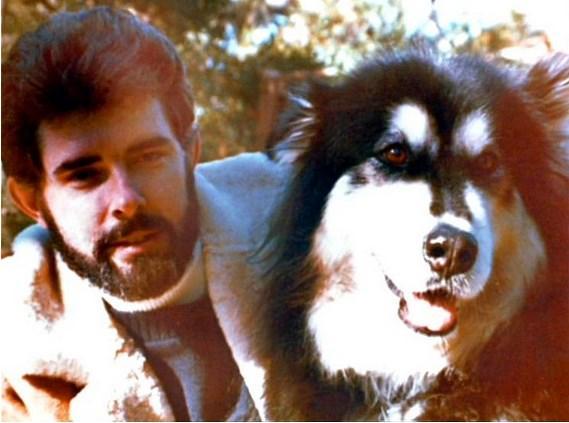 George Lucas Chewbacca karakterini köpeğinden esinlenerek yarattı.  Indiana adlı bu tatlı köpek bilin bakalım başka ne için ilham olmuş? Evet, Indiana Jones. Arkadaş ne bereketli köpekmiş ya nasıl fikirler vermiş sahibine.