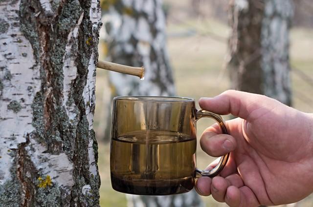 Huş özsuyu (Birch water)  Huş ağacının özsuyu şu sıralar dünyada trend oldu. Huş özsuyu veya İngilizce adıyla Birch sapolarak da adlandırılan bu su, Huş ağacının içinden özsuyunun çıkarılmasıyla elde ediliyor. İlkbahar aylarında özel bir yöntemle ağacın özsuyu çıkarılıyor ve paketleniyor.  Birch water'ın mucizevi birçok faydası bulunuyor: Karaciğer hastalıklarına iyi geldiği düşünülüyor bunun yanı sıra egzama,  ve migrene iyi geliyor. Vücuttaki toksinleri atmaya yardımcı oluyor ve selülitlerin azalmasında oldukça etkili. Şu anda İngiltere ve Amerika'da çok popüler olan bu suyun henüz ülkemizde satışı bulunmuyor.