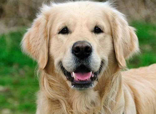 Köpek havaya doğru bakarak havlarsa kan dökülecek demektir.