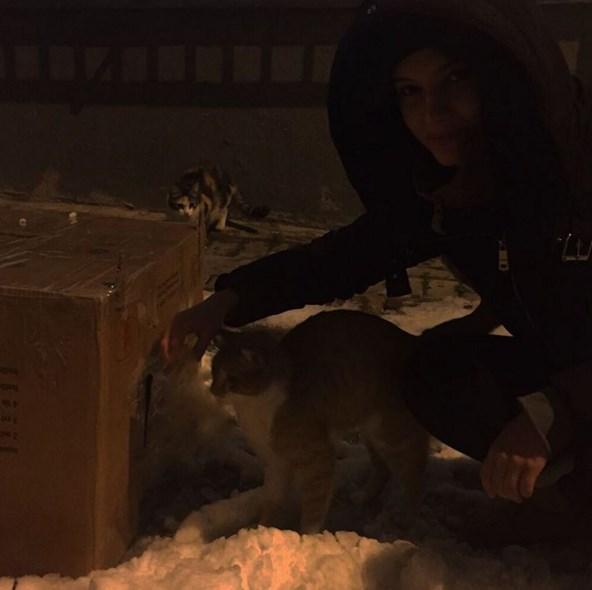 Leyla Lydia Tuğutlu  Sonunda zaman bulduk ve kedi evimizi yaptık😺sizden ricam onlara soğuktan korunabilecekleri bir yer yapmanız ve mama koymanız😽🐾
