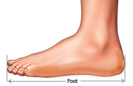 PARMAK BOYLARI  Ayak parmaklarının incelik ve kalınlıkları kadar uzunluk ve kısalıkları da önemlidir. Ayak parmaklarının boyları şöyle belirlenir: Ayak tabanında, topuk ucu ile parmak ucu arası ölçülür.