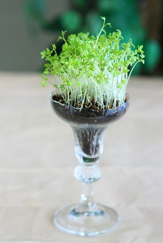 Minik bitkiler yetiştirmeyi seviyorsanız kadehler kullanışlı olabilir...  Evdeki kadehlerin içinde taze otlar yetiştirebilirsiniz. Az biraz toprak ve taze otların tohumları ile doldurup nemli tutun. Mutfak tezgahınıza renk, yemeklerinize mis kokular katsınlar.