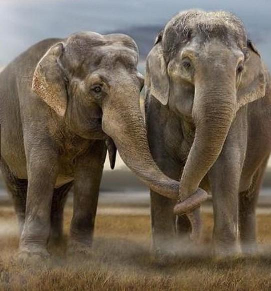 Filler zıplamayan tek memelidir