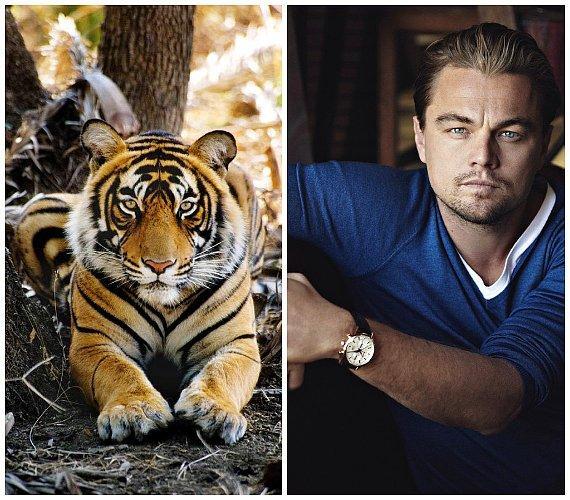 Leonardo Di Caprio Hakkında 20 Bilinmeyen Şey - 3