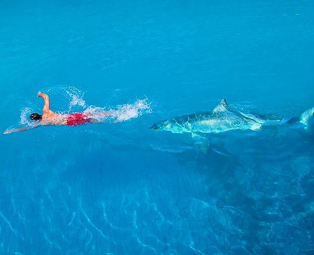 Köpek balığı saldırsına uğradı ve kurtuldu.