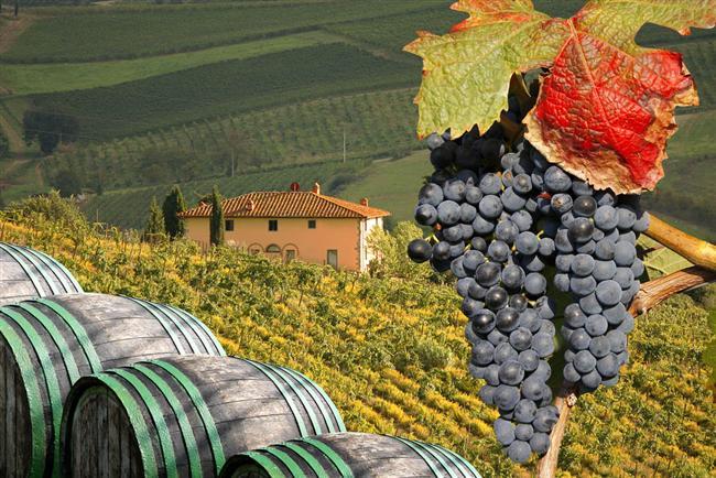 County – Yöresel – Kasaba tadı arayanlar: Toscana bölgesi (İtalya) mantar zamanı; porchini, pinaroli, chanterelle ve kralları truffe toplama zamanı başlıyor
