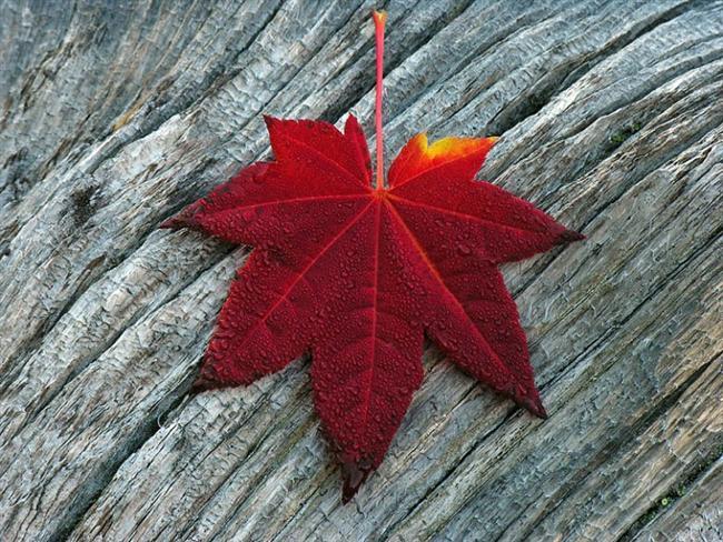 KIRMIZI:   Belirleyici ve yönlendiricidir. Arzuludur, iştahlıdır, hırslıdır. Duygularını anlatırken tepkiseldir. Liderlik ve önderlik özellikleri toplumca hemen fark edilir. Kan basıncını ve solunumu hızlandırabilir. İnsanları çabuk karar almaya ve beklentileri arttırmaya teşvik edici bir etkisi vardır. Kırmızı, dikkat çekici bir renktir. Kırmızı renkteki kelimeler ve objeler insanların dikkatini hemen çeker. Dekorasyon ve dizayn yaparken kırmızıyı tercih edersek bu objeler hemen farkedilecektir.Kırmızı, duygusal yoğunluğu arttıran ve çoşturan bir renktir. Kırmızı kıyafetler insana özgür enerjik bir moda sokabilir.Kendini kontrol etmekte zorluk çekenlerin kırmızı renkten uzak durmalarını tavsiye ederiz. Trafik ışıklarında 'dur' sinyali olarak kullanılmasının nedeni de budur.