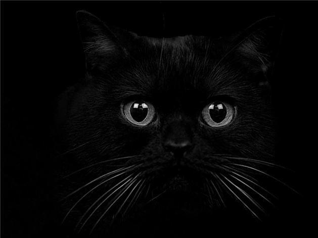 SİYAH:   Tartışmalı bir renktir. Bir taraftan karanlık güçler, suç ve kötülük ile düşünülürken, diğer taraftan sadakat, sebat, dayanıklılık, ihtiyat, bilgelik ve güvenilirlik ile ilişkilendirilir. Bir tarafta yönetim ve güç anlamına gelirken diğer taraftan acı, keder ve yas anlamına gelir.Siyah, pek çok insan için kıyafet rengidir. Bazıları siyahı güçlü ve ciddi görünmek için kullanır. Bazıları ise daha zayıf gösterdiği için tercih eder.Siyah rengi seven insanlar genellikle özgüveni yüksek, azimli ve kararlı kimselerdir. Ayrıca, siyah giyen insanların ruhsal sorunlarının daha fazla olduğu tespit edilmiştir. Özellikle çocuklarda inatçılığa ve depresyona neden olabilir.