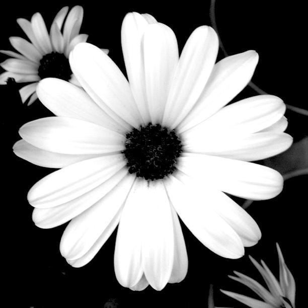 BEYAZ:   Saflığı, temizliği ve masumiyeti simgeler. Pek çok kültürde gelinler beyaz giyer. Ayrıca temizliği simgeler.Bu yüzden doktorlar, hemşireler ve laboratuvar teknisyenleri steril görünmek icin beyaz giyerler. Beyaz, ışığı yansıtır ve ortamı serin tutar.Dolayısıyla yaz ayının kıyafet rengidir. Beyaz rengi seven insanlar genellikle, temizliği, aydınlığı ve düşünmeyi seven, hayal dünyası geniş, soğukkanlı ve uzlaşmacı kişilerdir.