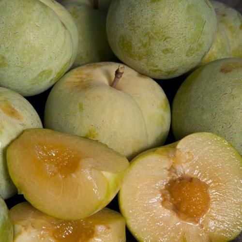 Pluot   Kayısı ve erik karışımı olan bu küçük meyvenin 20 türü bulunmaktadır. Lif, A ve C vitamini deposu olan bu meyvenin her bir tanesi 40 ile 80 kalori içerir. Meyve olarak tüketilebileceği gibi sos yapımında da kullanılır.