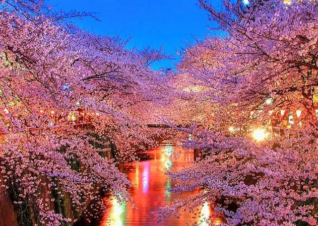 Bu muhteşem Sakura ağaçlarını bir de yerinde görmek ister, Japonya'ya giderseniz.