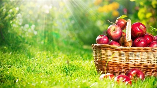 Kova - Elma  Elmanın hayatımızdaki yeri o kadar fazla ki bir iyi bahsederler ondan bir kötü, bir meyve hem iyi hikayelerde hemde kötü hikayelerde nasıl var olabiliyorsa Kova burcu insanı da özellikleriyle sizi şaşırtmaya yeter. Elma değil midir bir mucide yer çekimini bulduran, pamuk prensesi zehirleyen, cildimizi güzelleştiren.. Hatta elma değil midir Adem ile Havvayı cennetten eden... İşte Kova burçları da böyledir mucit, orjinal , yenilikçi aynı zamanda kendini beğenmiş, dikkat çeken ve egoist, ister istemez kendinizi onun yanında bulursunuz
