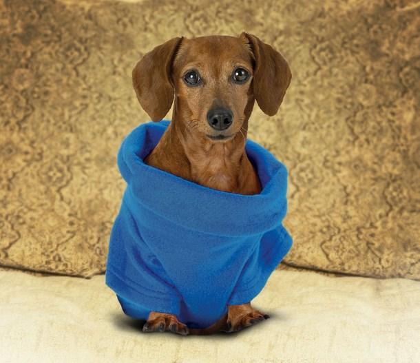 Köpekler için snuggie: Bazen snuggie'nin neden üretildiğini anlayabiliyoruz. Televizyon kumandasını veya sodanızı tutmak istediğiniz zaman kollarınızın sıcak kalmasını isteyebilirsiniz. Peki ya köpekle için böyle bir şey nasıl olur? Köpekleri süveterler içine sokuşturup onları güzel göstermekte bir işe yaramayabilir. Köpekle kesinlikle böyle bir şeye gerek duymuyor.