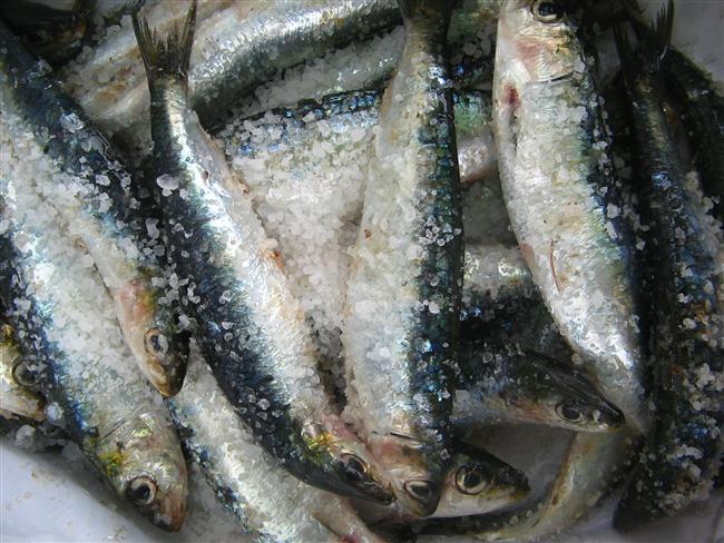 Balıklar  * Yağsız, küçük, ince balıklar 6 ay * Yağlı tombul balıklar 2-3 ay  * Pişmiş balık 2 ay * Kalamar, karides, ahtapot 3-6 ay