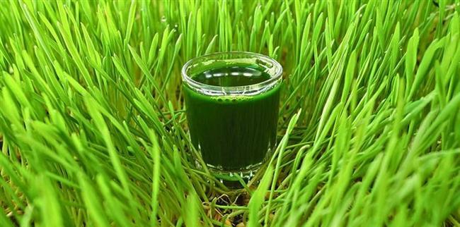 Buğday çimi genellikle toz veya meyve suyu şeklinde servis edilirler ve vitamin- mineral yönünden oldukça zengindirler. Bilimsel çalışmaların sağlıkla ilgili iddialarını desteklemesiyle birlikte biraz eksiktirler. Bu ürünlere daha lezzetli düşük kalorili temizleyici yiyecek ve içecekler eklenebilir.