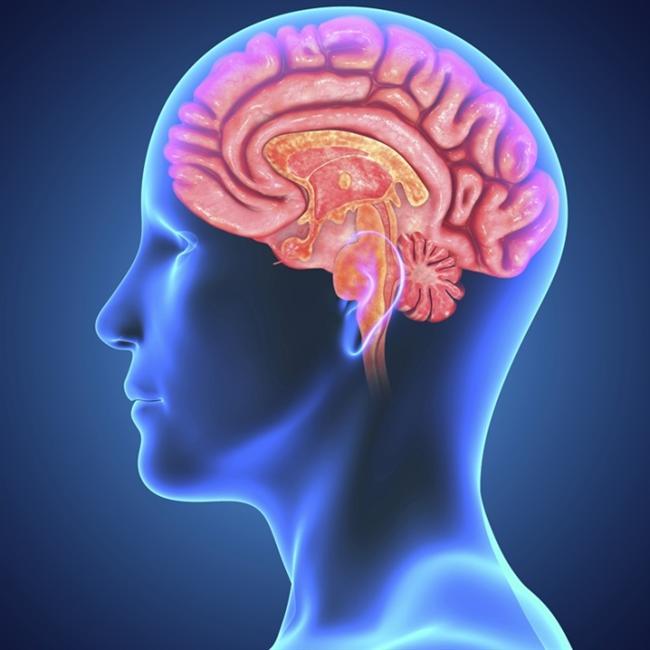 Yani yeni bir şeyler öğrenmek ya da çılgınca bir şeyler yapmak beyninizin gelişmesine yardımcı olur. Ayrıca sizden daha zeki olan ya da daha bilgili insanlarla konuşmak beyniniz üzerinde olumlu etki bırakır.