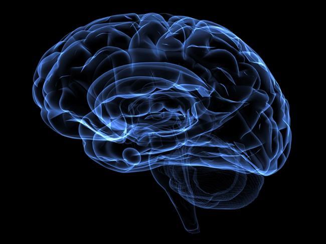 4. Zihinsel işler beyini yormaz. Araştırmalara göre bu zihinsel işler ne kadar zor olursa olsun ya da ne kadar uzun sürerse sürsün beyni besleyen damarlardaki kan akışının sabit kaldığı ölçüldü.