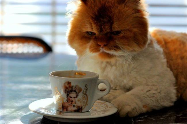 Kafein  Kafein içeren her türlü yiyecek ve içecek kedilerin sindirim ve sinir sistemlerini etkiler. Kafein onların vücutlarında aksiyete, hızlı kalp atımı, kas spasmı vs gibi toksik etkilere neden olabilir.