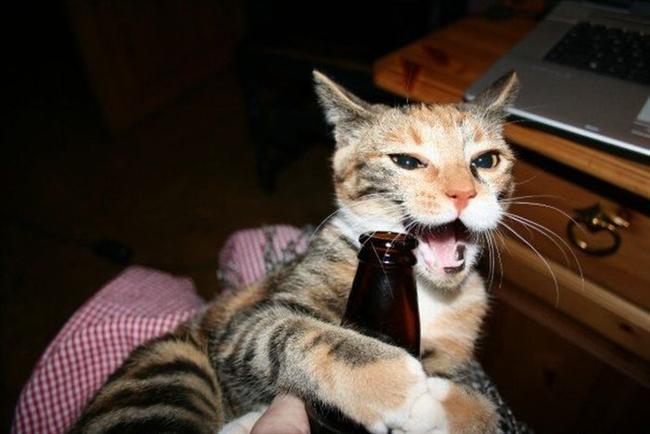 Alkol  Alkol ve alkol içeren yiyeceklerin tümü yasaklanmıştır. Alkol kedilerin ciğer ve beyin fonksiyonları doğrudan etkiler. Çok küçük bir miktar bile olsa alkol ciddi tehlike içerir. Alkol kesinlikle ölümcül etkilere sahiptir ve kesinlikle uzak tutulmalıdır.  Kaynak: patiliyo.com