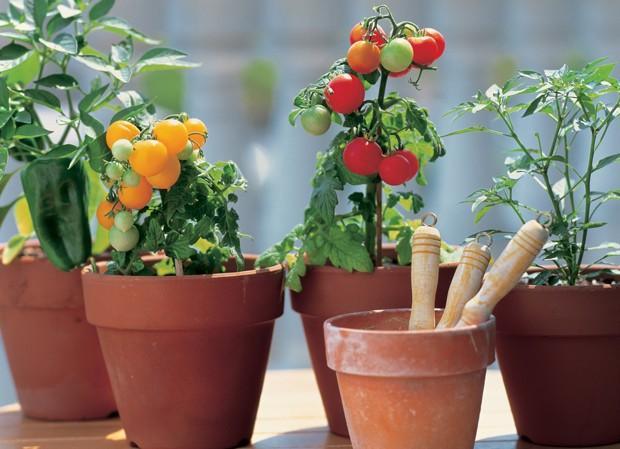 * Taze otlar, sağlıklı bir yemeğe enerji katar. Mutfağınızda bunları uygun saksılarda kendiniz yetiştirin. * Kepekli spagettiyi ince kıyılmış kabak, sebze köftesi ve çiğ domates sosuyla karıştırıp yemeyi deneyin.