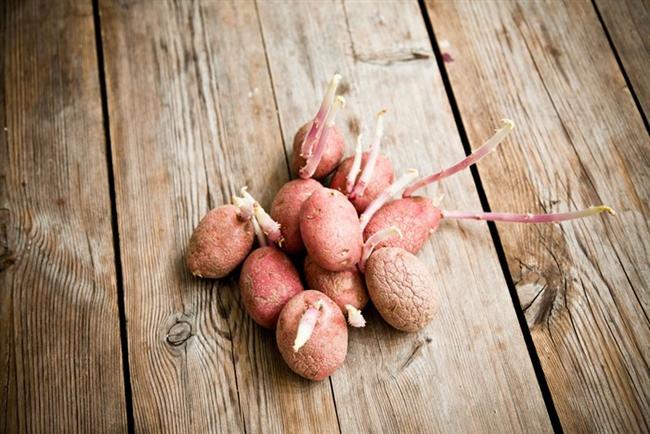 Filizlenmiş patates  Filizlenen patateslerinizi toprağa dikerseniz yeniden büyürler.