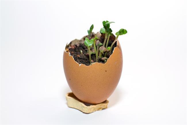 Bahçeyle uğraşıyorsanız toprağınızın daha fazla kalsiyum içermesi için yumurta kabuğunu döverek gübrenize katabilirsiniz. Evcil hayvanınızın yemeğine katarsanız kalsiyum miktarını artırmada etkili olacaktır. Kabuğunu toz haline getirerek kahve filtrenize koyduğunuzda ise ucuz kahvelerin acılığını büyük ölçüde azaltmış olacaksınız.
