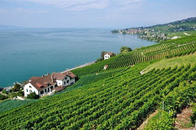 Cenevre Gölü Bölgesi, yeni ve yenilenen müzeleriyle: Vaud  Şehir, İsviçre'nin batısının büyük bir parçasını kaplar. Sınırları Cenevre Gölü'nden, Neuchatel Gölü ve Morat Gölü'ne kadar uzanır. Audrey Hepburn ve Charlie Chaplin'in sessiz ve huzur dolu bir yer olduğu için buraya geldiği bilinir. Çağdaş sanat galerisi, açık festivali ve sinema merkezleri ile aynı zamanda kültürel bir şehirdir.