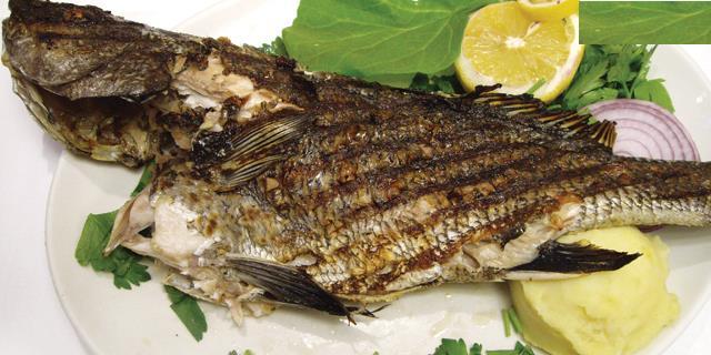 Eşkina  Yerli bir balık türüdür. Ekim ayında sıklıkla tercih edebiliriz.