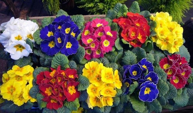 """Kahve, toprağın pH değerini değiştirerek bazı çiçeklerin rengini değiştirebiliyor.  <a href=  http://mahmure.hurriyet.com.tr/foto/yasam/sonbaharda-ekebileceginiz-cicekler_41198 style=""""color:red; font:bold 11pt arial; text-decoration:none;""""  target=""""_blank"""">  Sonbaharda Ekebileceğiniz Çiçekler! !"""