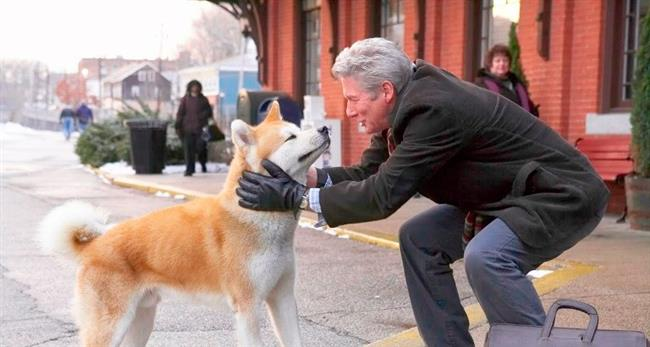 Hachiko: Bir Kopegin Hikayesi - Hachi: A Dog's Tale   Profesörün hayatını kaybetmesinden sonra Hachi istasyona gider ve profesörün gelmesini bekler başkaları onu sahiplendiysede yanlarında durmaz kaçarak istasyona döner, profesörün ölümünden itibaren tam 9 yıl istasyonda sahibini bekleyen Hachi en sonunda istasyonda hayata gözlerini kapar..  Şimdi asıl mevzuya gelelim, yukarıda anlatılan film aslında yaşanmış bir hikaye, olay Japonyada 1923-1935 yılları arasında yaşanmış, ve Hachinin sadakatinden ötürü Japonyadaki Shibuya İstasyonunun önüne onun bir heykeli dikilmiş..Hachiko'nun yılmadan beklediği Japon profesörün adı ise Hidesaburō Ueno imiş..