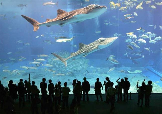 İstanbul Akvaryum  Dünyanın en büyük tematik akvaryumu olan İstanbul Akvaryum 1.500 farklı türden, toplam 15 bin canlıyı bünyesinde barındırıyor.Denize tutkunsanız mutlaka görmeniz gereken bir yer.