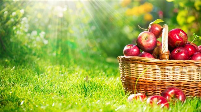 """Elma  Elmanın içeriğindeki kuarsetin, güçlü bir kanser koruyucu olarak biliniyor. Bununla birlikte içeriğinde suda çözünebilen lif olan pektin sayesinde sindirim sisteminin düzenli çalışmasını sağlıyor ve kolon kanseri riskini düşürüyor. Düzenli olarak günde 1 orta boy elma tüketmeniz, kanser riskinin azalmasını katkıda bulunuyor.  <a href=  http://mahmure.hurriyet.com.tr/foto/saglik/meme-kanserine-karsi-10-etkili-yontem_41214 style=""""color:red; font:bold 11pt arial; text-decoration:none;""""  target=""""_blank"""">  Meme Kanserine Karşı 10 Etkili Yöntem!"""